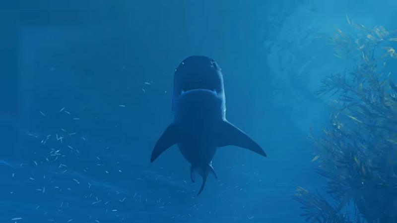 E3 2018: Tripwire Interactive Анонсирована игру про акулу-людоеда — Maneater